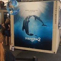 Real Dolphin Tale! Must See Before Visiting Clearwater Marine Aquarium